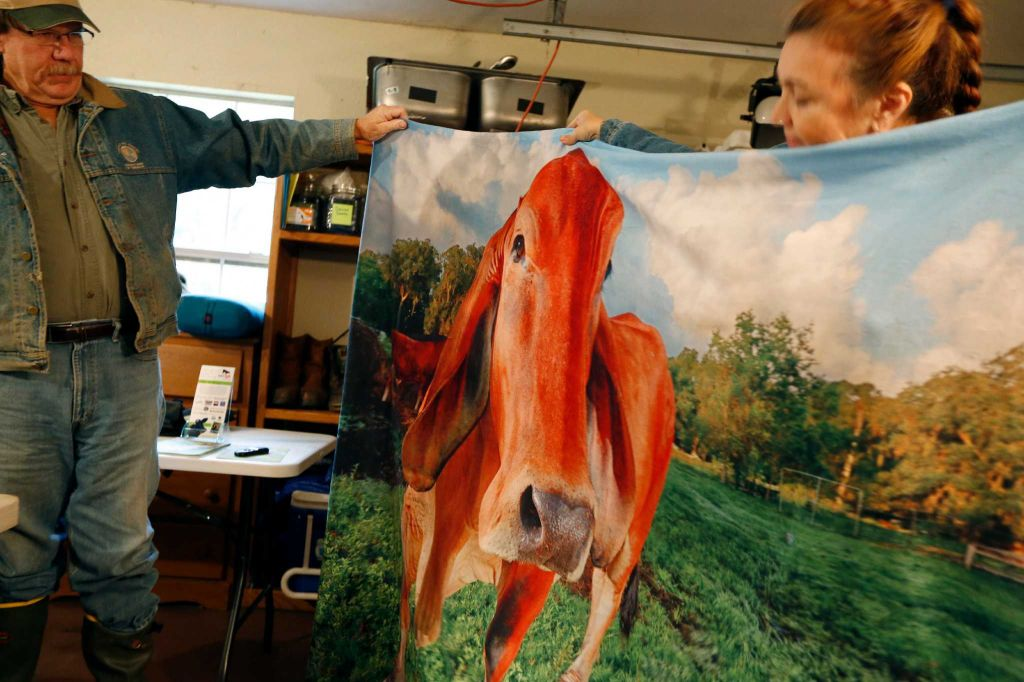 "Rowdy Girl Sanctuary founder Renee King-Sonnen and her husband Tommy show a blanket with the image of their Brahman ""Cinnamon"" Tuesday, Jan. 26, 2016, in Angleton. The vegan farm sanctuary is run by King-Sonnen, who recently bought a herd of cattle from her husband in an effort to rescue the cows from slaughter. Now, the sanctuary is home to 48 cows, 7 chicken, a turkey, 4 horses and 4 pigs, who get to stay on the 96-acre lot in a sort of spa-retirement setting. While some of the cows were rescued locally, including the many from her husband's herd, there are new additions coming in from as far away as Florida, as King-Sonnen works to disrupt the traditional farming system that she feels is cruel to animals. ( Steve Gonzales / Houston Chronicle )"