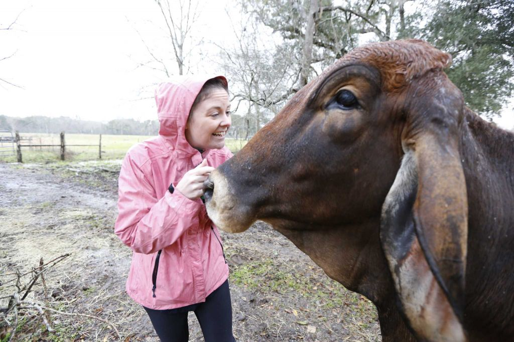 "Houston Chronicle Reporter Maggie Gordon spends some time with Rowdy Girl Sanctuary resident ""Cinnamon"" Tuesday, Jan. 26, 2016, in Angleton. The vegan farm sanctuary is run by Renee King-Sonnen, who recently bought a herd of cattle from her husband in an effort to rescue the cows from slaughter. Now, the sanctuary is home to 48 cows, 7 chicken, a turkey, 4 horses and 4 pigs, who get to stay on the 96-acre lot in a sort of spa-retirement setting. While some of the cows were rescued locally, including the many from her husband's herd, there are new additions coming in from as far away as Florida, as King-Sonnen works to disrupt the traditional farming system that she feels is cruel to animals. ( Steve Gonzales / Houston Chronicle )"