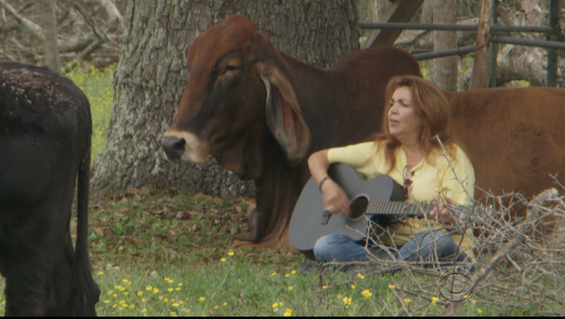 Renee Sonnen singing to one of the cows on the couple's cattle ranch. Photo Credit: CBS News