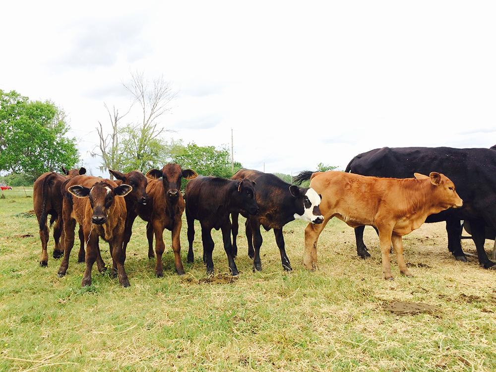 Herd Babies
