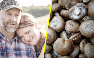 Cow and Chicken Farmers Switch to Growing Mushrooms   LIVEKINDLY