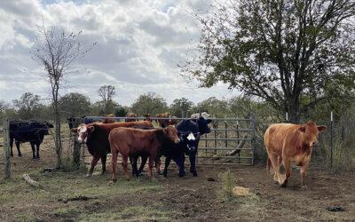 Traylor Herd