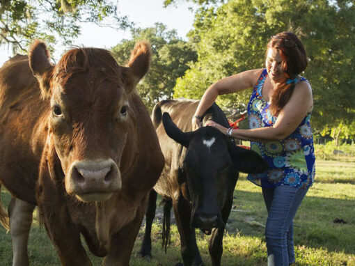 Vegan Story Teller Article
